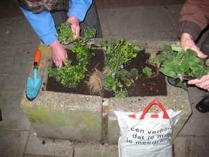 Spannend Valkenbosplein guerrilla gardening