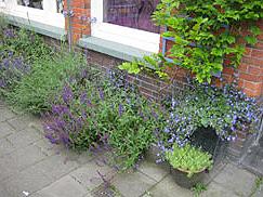 Alleen tuinieren geveltuin Meer groen? Zelf doen!