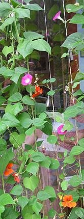 groene gordijnen bloemen