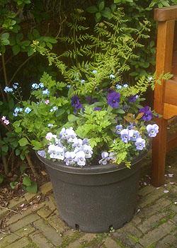 plantenbakken / minituintje
