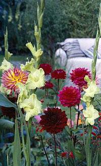 Plantenbak zomerbollen