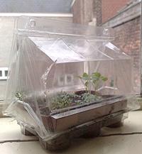 'Voortrekken' in de vensterbank verticaal tuinieren