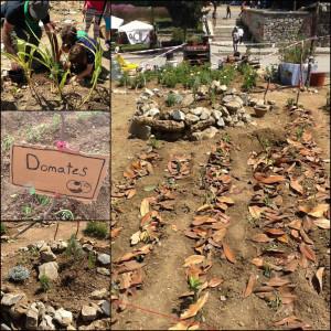 Stadslandbouw Taksimplein