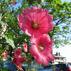 bloeiende boomspiegels