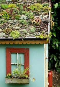 subsidie groene daken