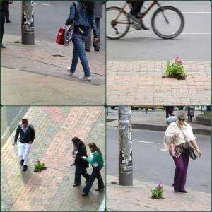 guerrilla gardening bogota
