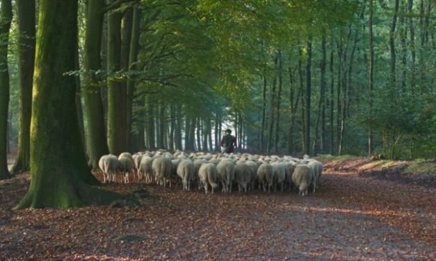 Slow Food benefietdiner voor de Nederlandse schaapherders